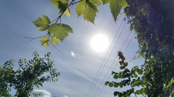 102 Himmel über Enzberg Chemtrails am 27.06.16 10.28 Uhr